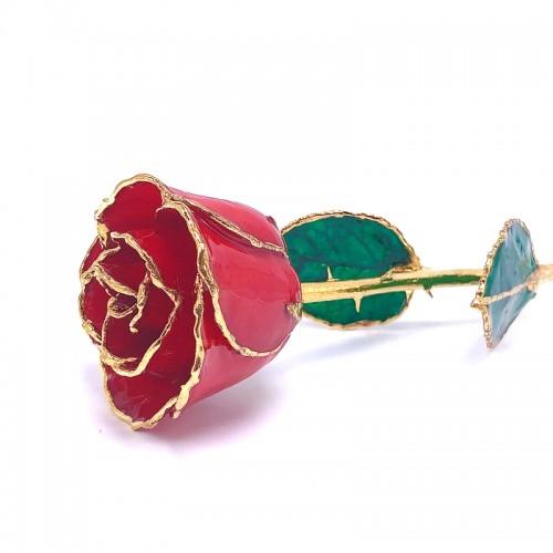 24K Gold Dipped Ruby Rose